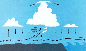 Schematic cross section through a sea breeze front. If the air inland is moist, cumulus often marks the front.