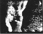 Image of one of the dogs onboard Sputnik 6, demodulated by CIA electronic intelligence